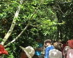 Guided Walk and Work Day at Lismore Rainforest Botanic Gardens
