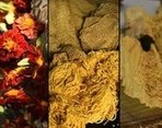 Natural Plant Dye Workshop